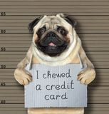 Bad dog chewed a credit card. The bad dog chewed a credid card. He arrested by the police for this crime and sent to prison. Lineup background stock photo