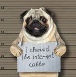 Bad dog chewed the internet cable. The bad dog chewed the internet cable. He arrested by the police for this crime and sent to prison. Lineup background stock images