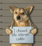 Bad dog chewed the internet cable 2. The bad dog chewed the internet cable. He arrested by the police for this crime and sent to prison. Lineup background stock photography