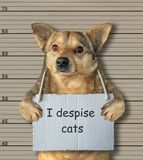 Bad dog despising cats. The bad dog despises cats. He arrested by the police for this crime and sent to prison. Lineup background stock photo