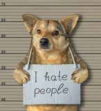 Bad dog hating people. The bad dog hates people. He arrested by the police for this crime and sent to prison. Lineup background stock image