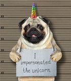 Bad dog impersonated the unicorn. The bad dog impersonated the unicorn. He arrested by the police for this crime and sent to prison. Lineup background stock photography