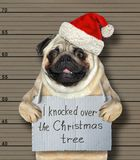 Bad dog knocked over the Christmas tree. The bad dog in a red hat knocked over the Christmas tree. He arrested by the police for this crime and sent to prison stock photography