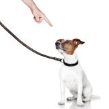Bad dog looking up. Bad behavior dog being punished by owner Stock Photo