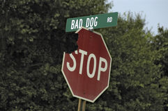 Bad Dog Road! Royalty Free Stock Images