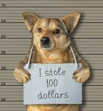 Bad dog stole 100 dollars. The bad dog stole 100 dollars. He was arrested for it. Lineup background royalty free stock photography
