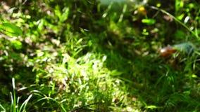 Bad ecology in forest tilt up stock video