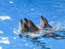 Bad ett för tre delfin efter andra royaltyfri fotografi