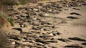 Bad för sol för elefantskyddsremsor stock video