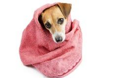 Bad gewassen hond stock foto's