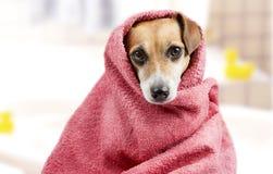 Bad gewassen hond stock afbeeldingen
