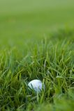 Bad golf ball lie. White golf ball with bad lie in long green rough grass - selective focus on ball Royalty Free Stock Photos