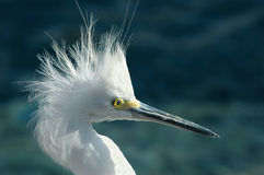 Bad Hair Day. Close-up shot of a bird (crane Royalty Free Stock Images