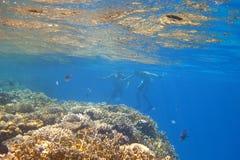 Bad im schönen Meer lizenzfreie stockfotografie