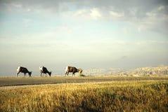 Bad-lands le Dakota du Sud Photographie stock