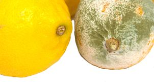 Bad Lemons Royalty Free Stock Photos