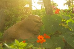 A bad ogre visitor in the garden. Statue of an ugly ogre in the garden in the afternoon Royalty Free Stock Images