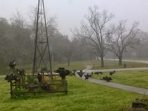 Bad Omen?. Black vulture convention stock photos