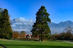 Huge Pine tree in Spa Gardens in front of swiss Alps, Bad Ragaz, Switzerland. Bad Ragaz with Alps and huge pine tree in front, Switzerland royalty free stock photography