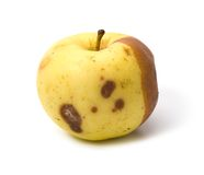 Bad rotten apple isolated Stock Photos