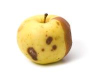 Bad rotten apple isolated Stock Photos