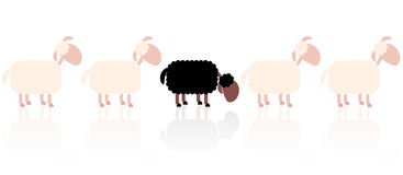 Bad Seed Black Sheep. Bad seed - sad black sheep between white sheep Stock Images