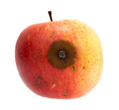 Bad spot on an organic wild apple Royalty Free Stock Images