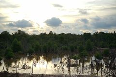 A bad swamp mangrove forest. A bad swamp ecosystem caused by humans stock photography
