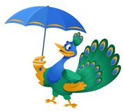 Bad weather. Funny peacock with umbrella. Cartoon styled vector illustration. Isolated on white. No transparent objects Royalty Free Stock Photo