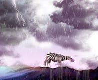 Bad weather and zebra Stock Image