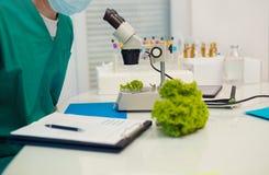 Badać genetycznie zmodyfikowany jedzenie w laboratorium fotografia stock