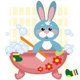 bada att duscha för hare Royaltyfria Foton