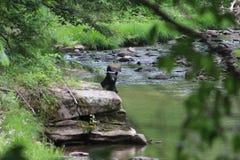 bada björn Royaltyfri Fotografi