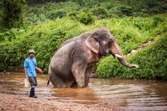 Bada den elefant mahouten, Khao Sok fristad, Thailand Arkivfoto