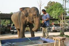 Bada elefanten Royaltyfri Bild