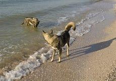 Bada en hund. Arkivbild
