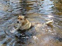 Bada en hund i det löst arkivbilder