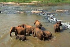 Bada för elefanter Royaltyfri Fotografi