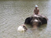 Bada med en elefant Arkivbild