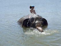 Bada med en elefant Arkivbilder