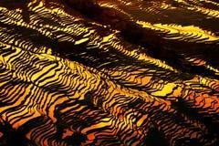 Bada risterrass på skymning arkivfoto