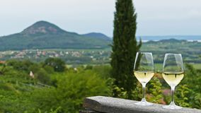 Two glasses of fine riesling wine in the Badacsony region in Hungary out in the nature. Badacsony is a volcanic wine region with perfect white wines royalty free stock images