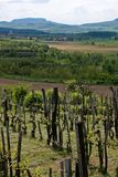 Badacsony wine. Typical panorama from Káli-medence (Basin Káli,  Balaton Uplands) with a wiev of the famous mountain, Badacsony, Hungary, Central Europe. This Royalty Free Stock Images