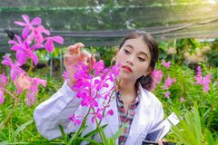 Badacz młode kobiety, będący ubranym białe suknie, sprawdzać orchidee i nagranie zmiany ulepszać storczykowych gatunki fotografia royalty free