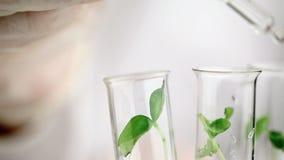 Badacz opuszcza fluid w próbną tubkę z rośliny próbką zbiory