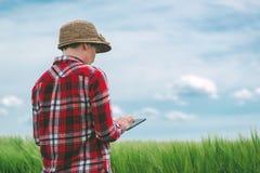 Badacz używa cyfrową pastylkę w pszenicznym uprawy polu Zdjęcia Royalty Free
