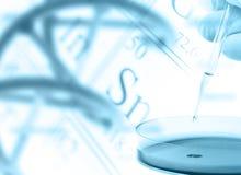 Badacz z Petri naczyniem i DNA modelujemy nad okresowym stołem Obraz Stock