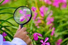 Badacze bierze powiększać połysk purpur orchidee - szkło zdjęcie royalty free