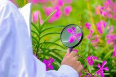 Badacze bierze powiększać połysk purpur orchidee - szkło zdjęcia stock
