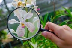 Badacze biorą powiększać połysk purpur orchidee - szkło obraz royalty free